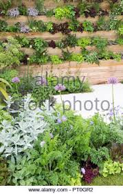 Wood Panel Living Wall Planted With Salad Herbs And Fruit Plants Including Various Cut And Come Again Lettuces Thyme Sage Alpine Strawberries Ch Stock Photo Alamy