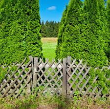 22 Creative Lattice Fence Ideas For Gardens And Backyards
