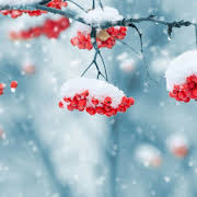 beautiful winter live wallpaper for