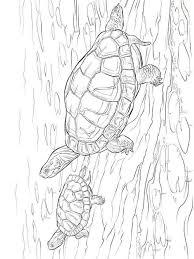 Kids N Fun Kleurplaat Schildpadden Schildpadden