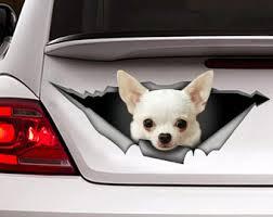 Chihuahua Car Decal Etsy