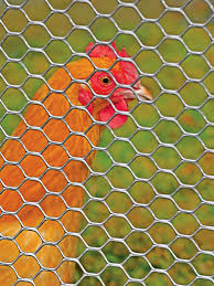 Poultry Fence 4 X 50 Tenax Plastic Poultry Fence Gardeners Com