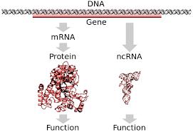 gene definition and exles biology