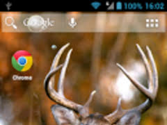 hunting deer live wallpaper 1 0 0 free