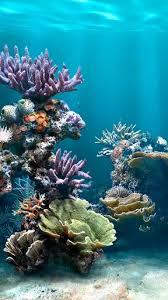 fish aquarium live wallpaper app