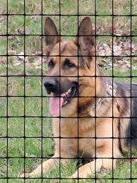 Pet Fence Pet Fence Tenax
