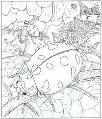 Kids N Fun Kleurplaat Natuur Rondom Het Huis Lieveheersbeestjes