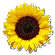 Sunflower Vinyl Sticker Car Window Bumper Laptop Select Size Wish