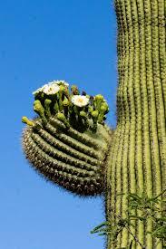 tucson botanical gardens desert in