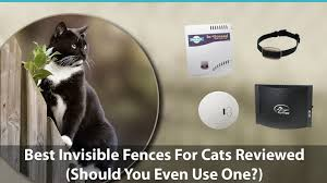 Best Invisible Fences For Cats Reviewed Do They Even Work