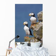 Horned Puffin Pair Perched Wall Mural Wallmonkeys Com