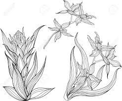 Drie Geisoleerde Zwarte En Witte Bloemen Kleurplaat Royalty