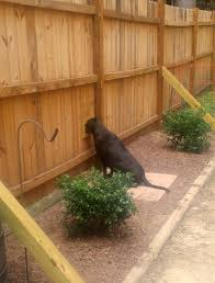 Hole In Fence Stopped Dog Digging Dog Backyard Dog Fence Diy Dog Fence