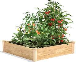Amazon Com Greenes Fence Cedar Raised Garden Bed 4 Ft X 4 Ft X 10 5 In Garden Outdoor