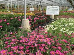 about us whitegates nursery west