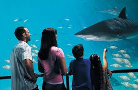 sea world theme park tickets pes
