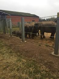 Electric Fence Shocking The Animals Picture Of Twycross Zoo Atherstone Tripadvisor