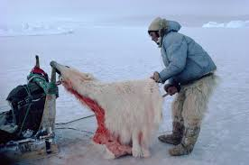 Science Source - Inuit hunter with polar bear skin