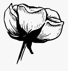 free black and white clipart garden