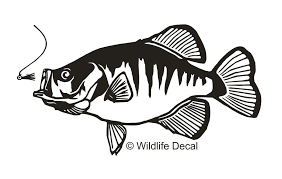 Crappie Decal Md Fishing Wildlife 1 With Jig Sticker Wildlife Decal