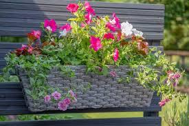 Gtn Xtra Advertiser Take Overs Gtn Xtra Gardman Crest Special A Basket Full Of Ideas For Beautiful Outdoor Planting