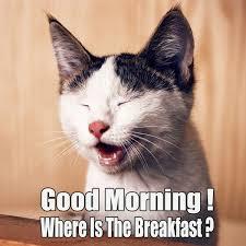 free funny good morning pic good