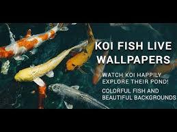 3d koi fish live wallpaper hd moving
