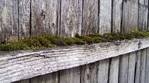 Remove Sun Damage Moss And Mold On Wood Fences Buzz Custom Fence