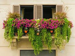 17 great urban gardening tips for