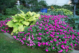 shade garden plants pink and green