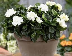 fragrant indoor plants the best
