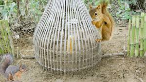 easy traps to catch squirrel in forest