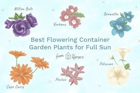 best flowering container garden plants
