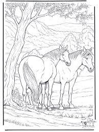 Kleurplaat Paard Kleurplaten Paarden
