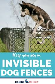Invisible Dog Fence Dog Fence Top Dog Breeds Dogs