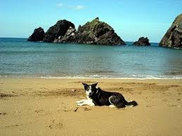 Top 5 places to take your dog in Salcombe | Salcombe TIC | Blog