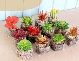 mini potted plants green succulents