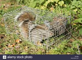 Squirrel Trap High Resolution Stock Photography And Images Alamy