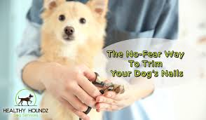 no fear way to trim your dog s nails