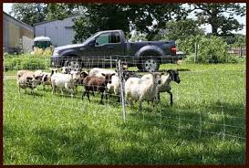 Mid America Homesteading Conference Premier1 Fencing Is Key To Rotational Grazing