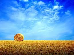 Жаркая погода продержится до 14 августа – AgroExpert - новости сель...