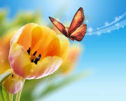 tulips erflies flowers bokeh