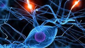 Descubren una red neuronal generalizada del cerebro humano donde ...