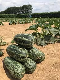 roundstone farm worthing 2020 all