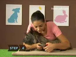 how to trim your dog s nails you