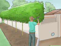 How To Plant A Bamboo Fence With Pictures Wikihow