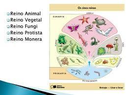 CINCO REINOS. | Cinco reinos, Ciencias, Biologia