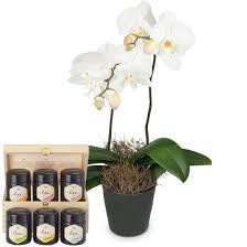 white orchid phalaenopsis in cachepot