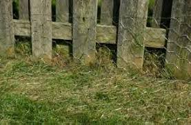 Montage Puppy Notes More Fencing Dog Proof Fence Cheap Dog Kennels Dog Fence