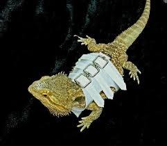 bearded dragon harness diy bearded